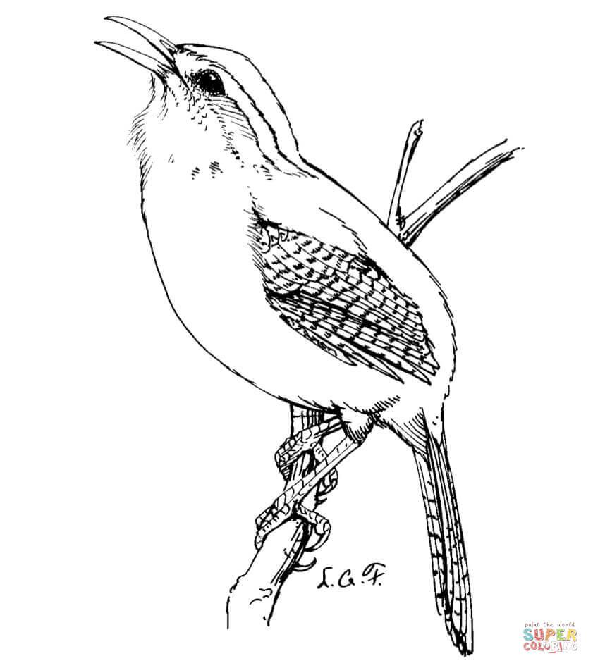 Wren coloring #15, Download drawings