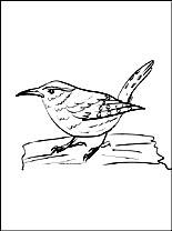 Wren coloring #6, Download drawings