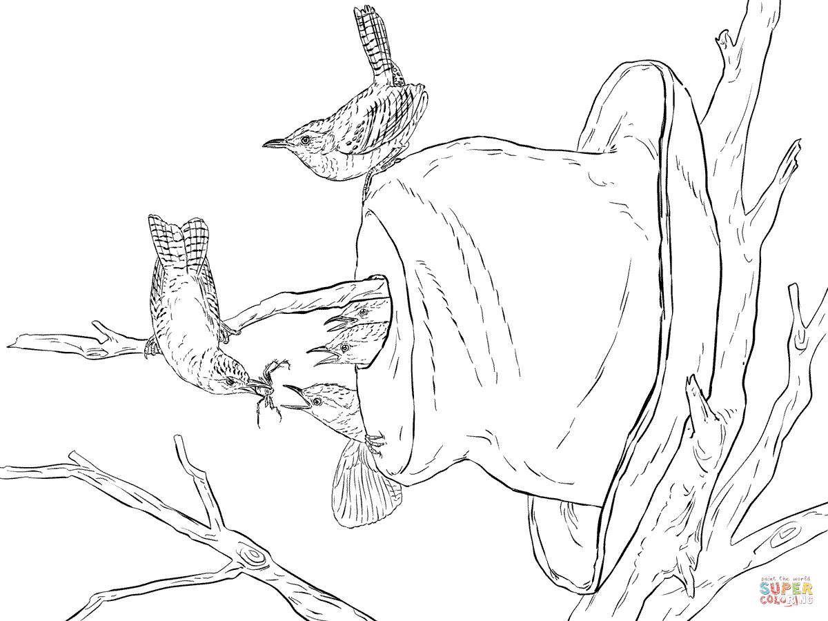Wren coloring #14, Download drawings