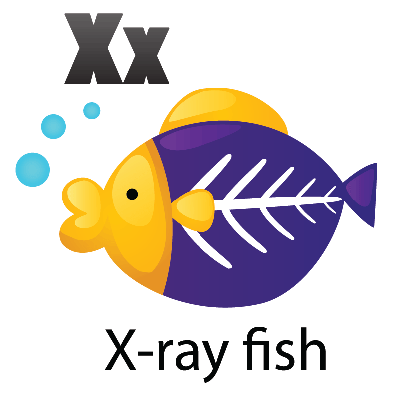 X-ray clipart #11, Download drawings