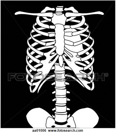 Xray clipart #9, Download drawings