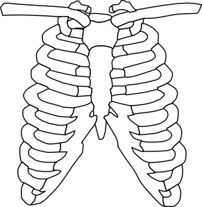 X-ray svg #14, Download drawings