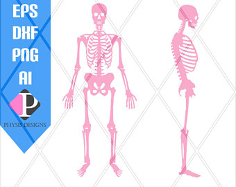 Anatomy svg #11, Download drawings