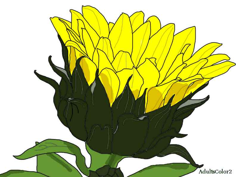Yellow Flower coloring #12, Download drawings