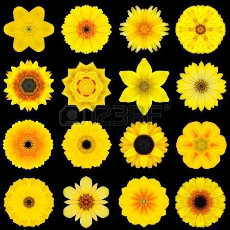 Yellow Flower coloring #15, Download drawings