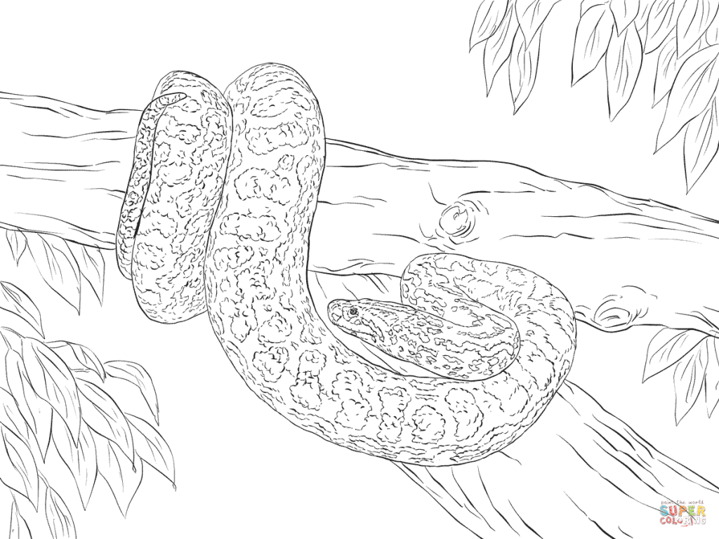 Yellow Mongoose coloring #7, Download drawings