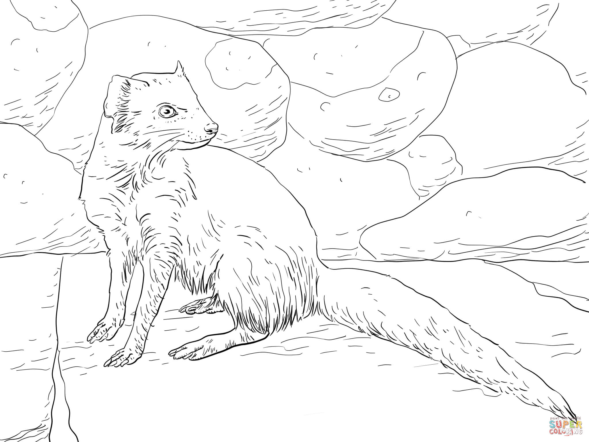 Yellow Mongoose coloring #9, Download drawings