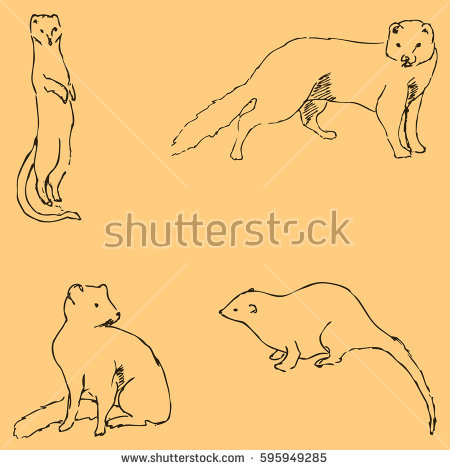 Yellow Mongoose coloring #12, Download drawings