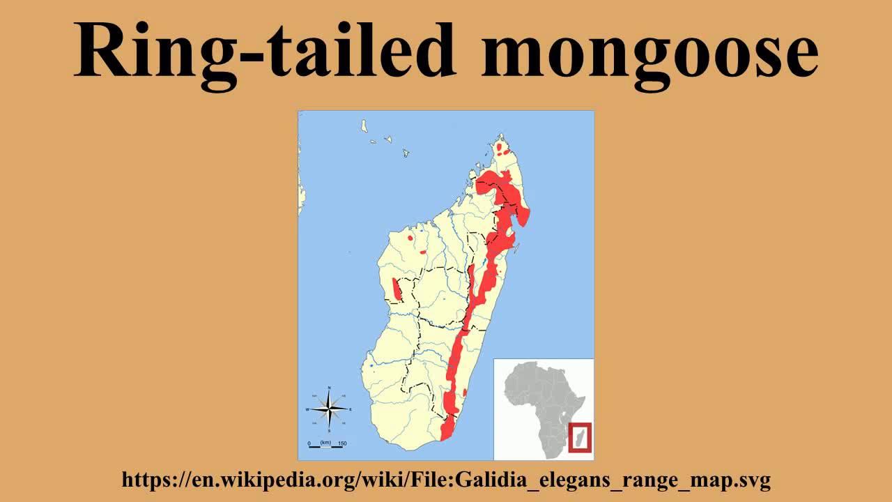 Yellow Mongoose svg #15, Download drawings