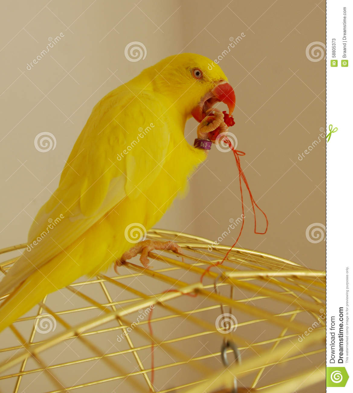 Yellow Ring Neck Parrot clipart #5, Download drawings