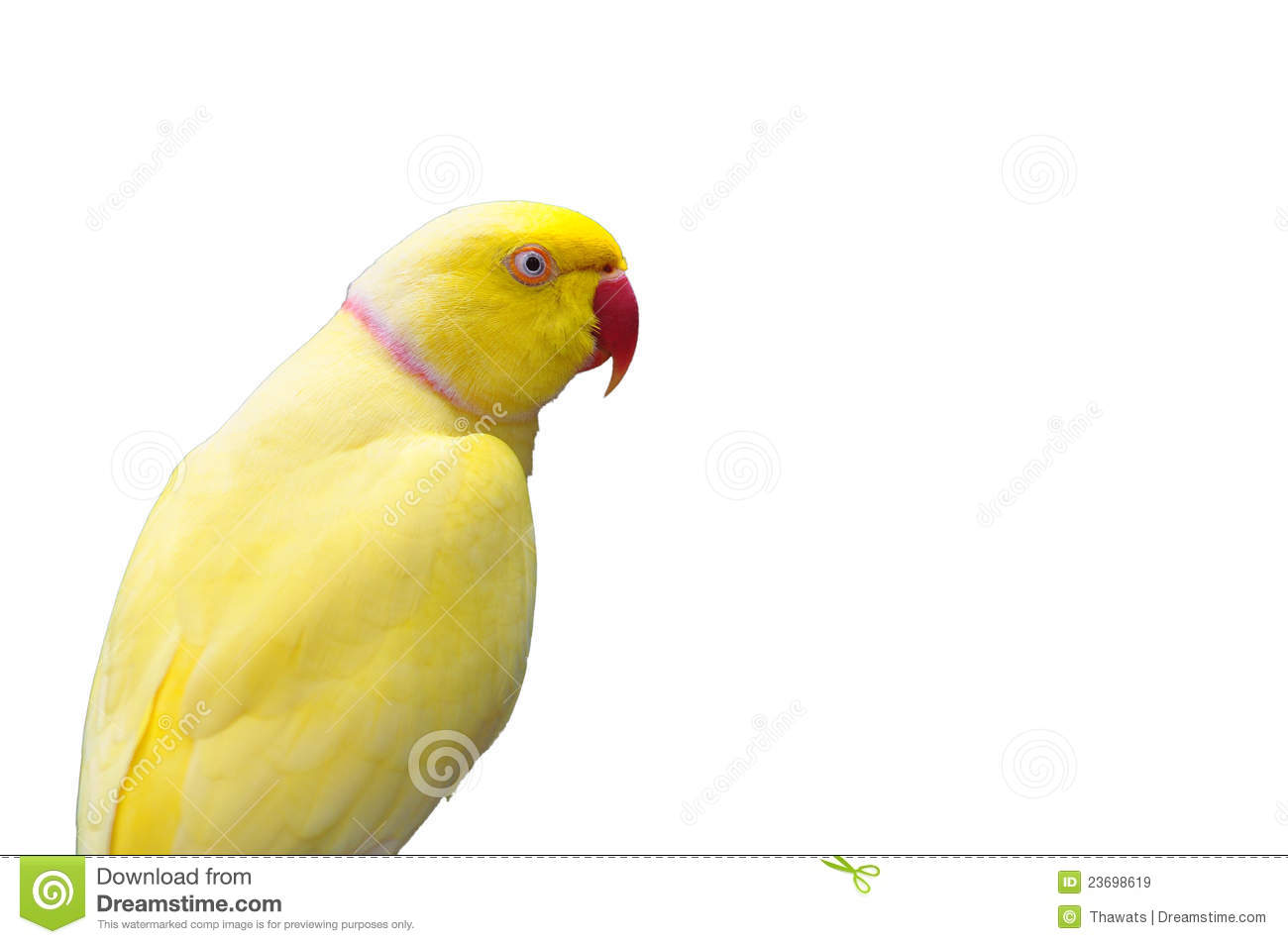 Yellow Ring Neck Parrot clipart #20, Download drawings