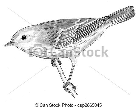 Yellow Warbler clipart #13, Download drawings