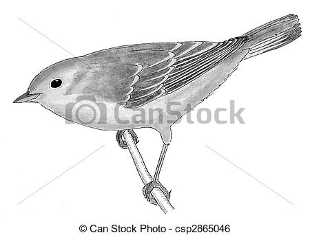 Yellow Warbler clipart #9, Download drawings