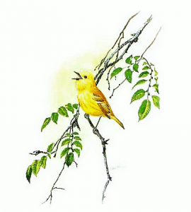 Yellow Warbler clipart #17, Download drawings
