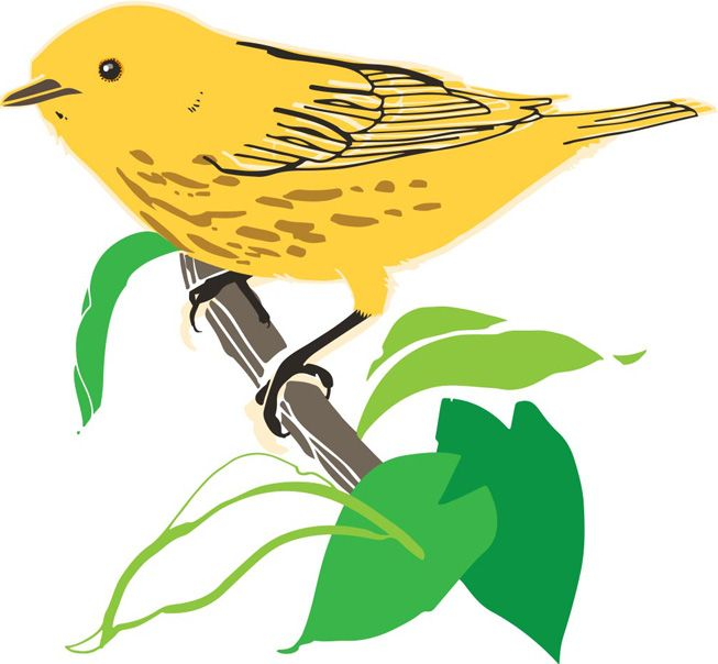 Yellow Warbler clipart #18, Download drawings