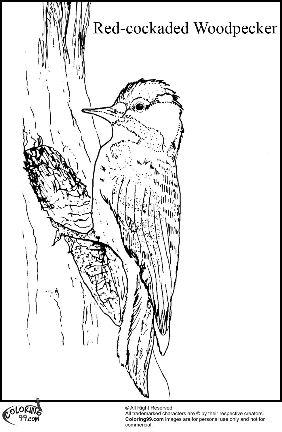 Yellow-fronted Woodpecker coloring #12, Download drawings