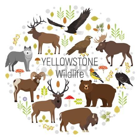 Yellowstone clipart #4, Download drawings