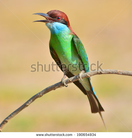 Yellow-throated Bee-eater clipart #2, Download drawings