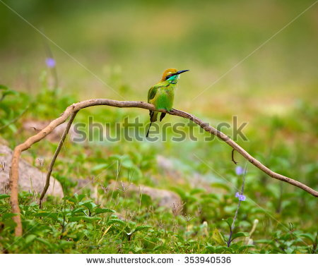 Yellow-throated Bee-eater clipart #3, Download drawings
