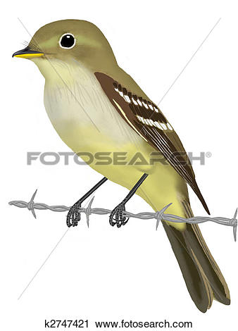 Yellow-throated Vireo clipart #13, Download drawings
