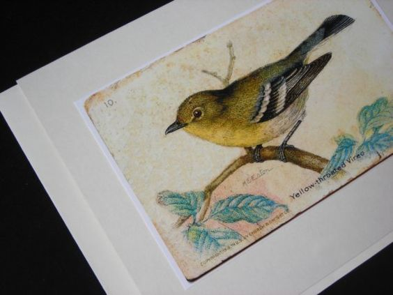 Yellow-throated Vireo coloring #7, Download drawings