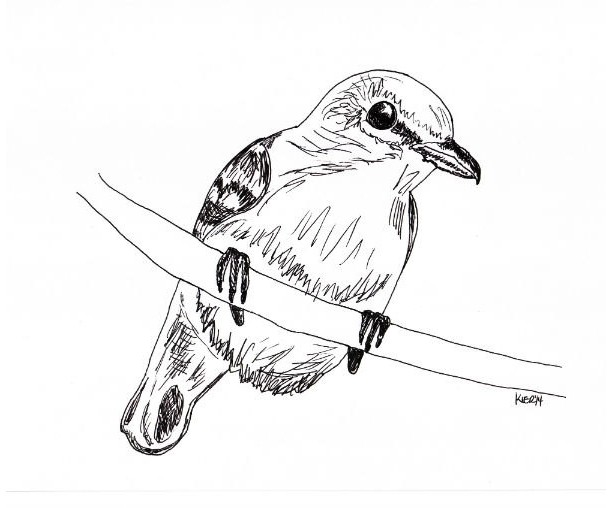 Yellow-throated Vireo coloring #9, Download drawings