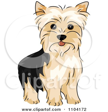 Yorkies clipart #17, Download drawings