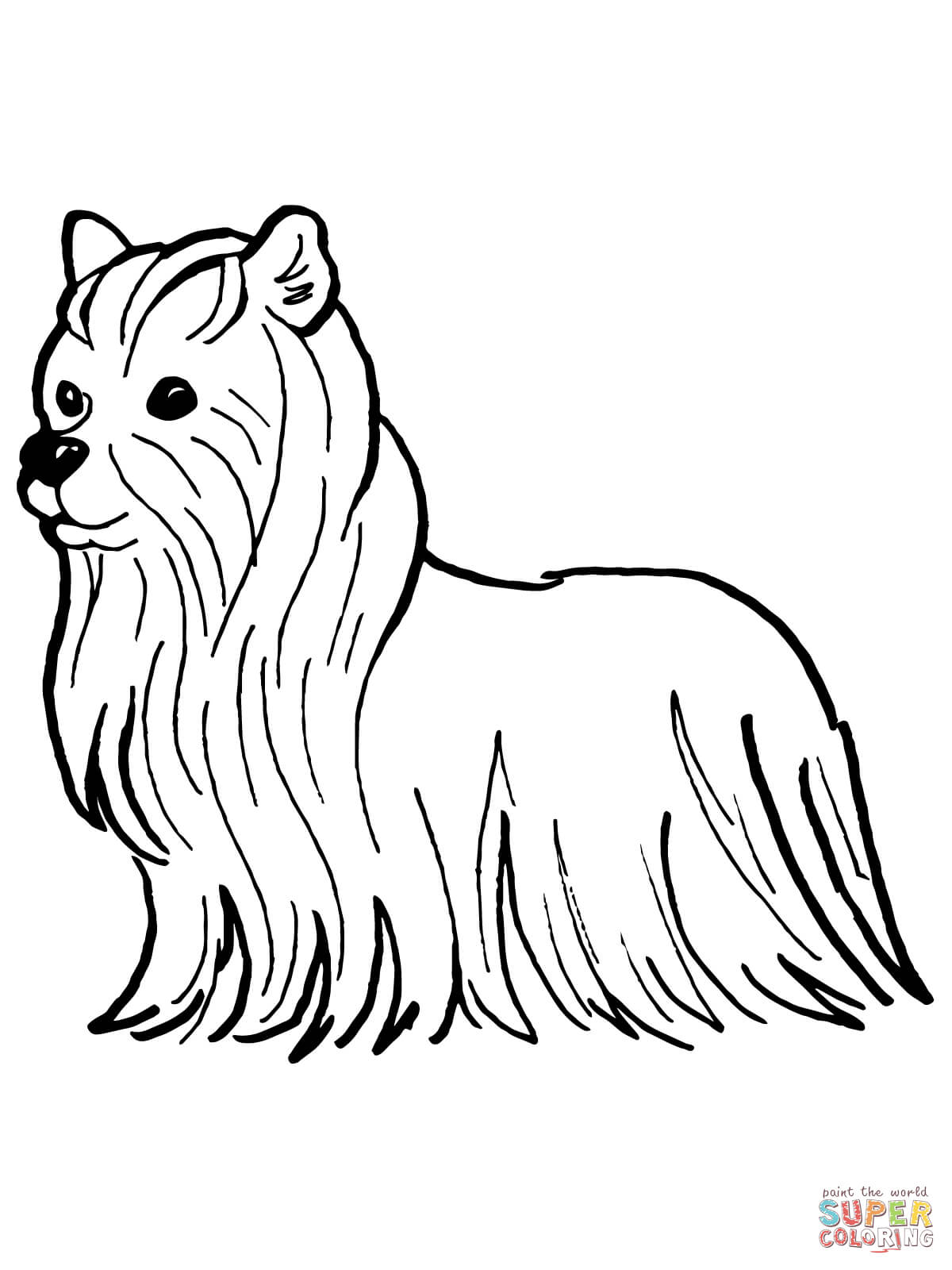 Yorkshire Terrier coloring #14, Download drawings