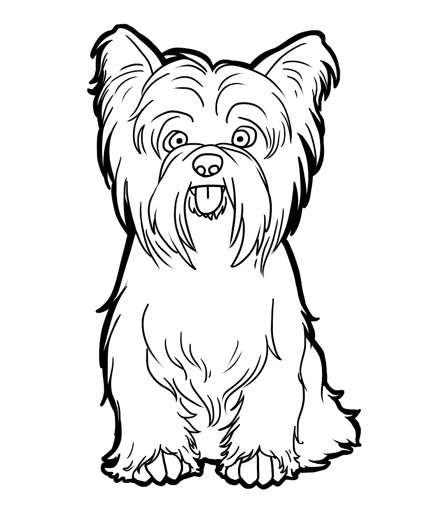 Yorkshire Terrier coloring #20, Download drawings