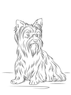 Yorkshire Terrier coloring #17, Download drawings