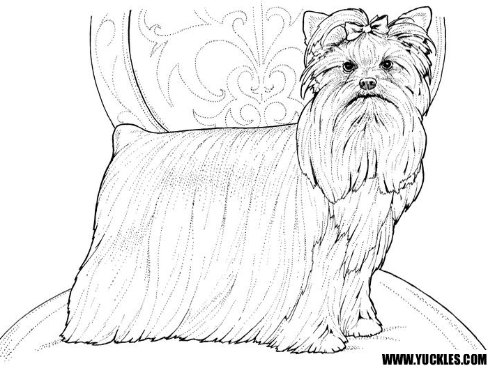 Yorkshire Terrier coloring #16, Download drawings