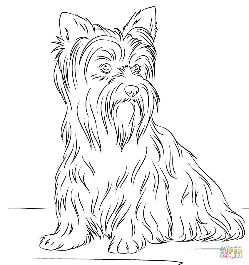 Yorkshire Terrier coloring #11, Download drawings