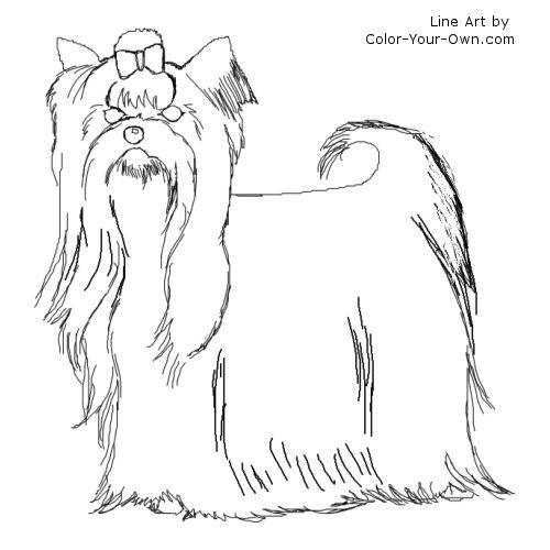 Yorkshire Terrier coloring #2, Download drawings