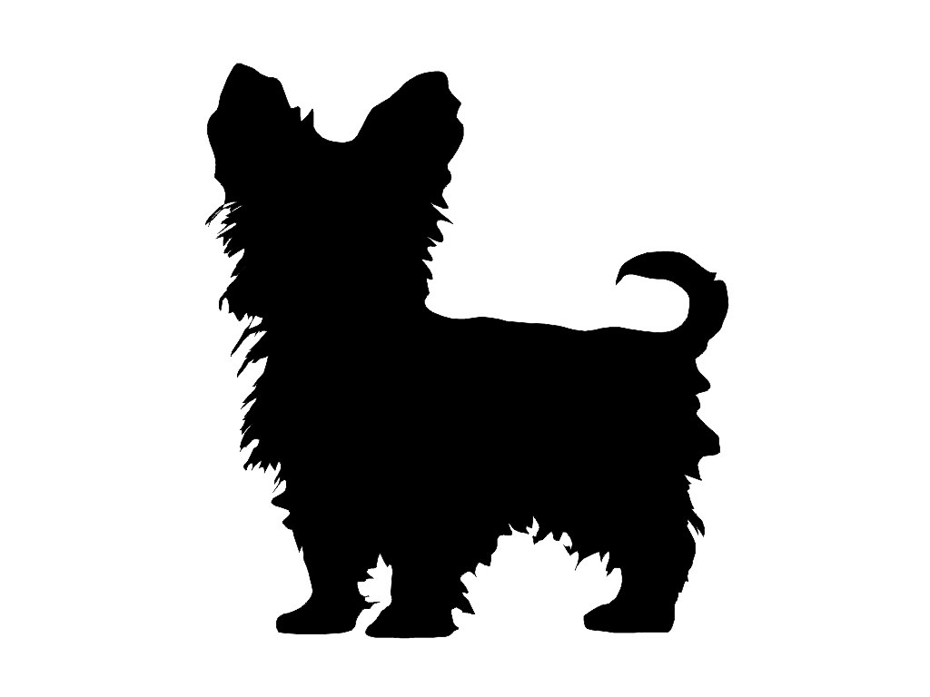 Yorkshire Terrier svg #6, Download drawings