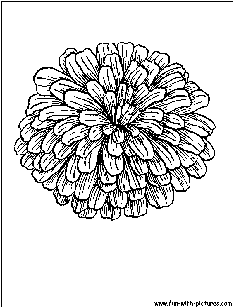 Zinnia coloring #9, Download drawings