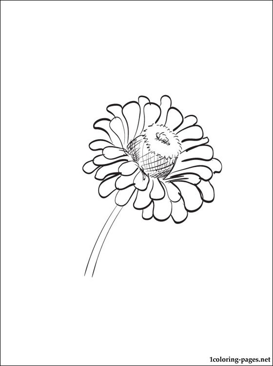 Zinnia coloring #20, Download drawings