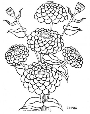 Zinnia coloring #12, Download drawings