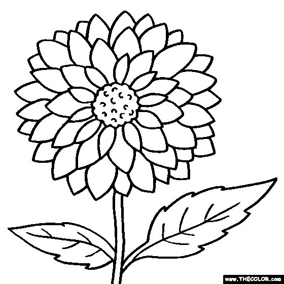 Zinnia coloring #5, Download drawings
