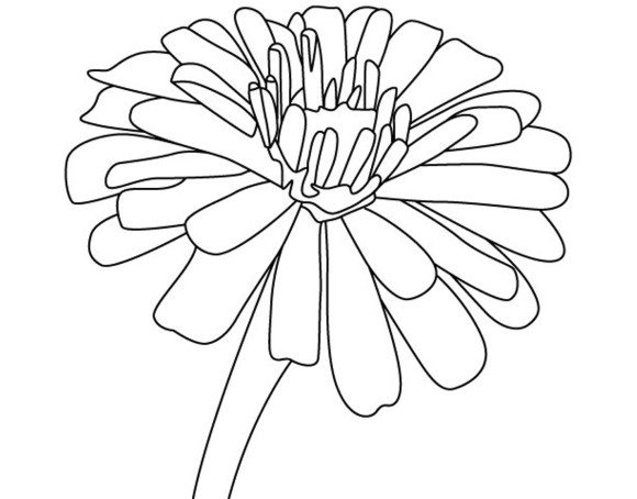 Zinnia coloring #3, Download drawings