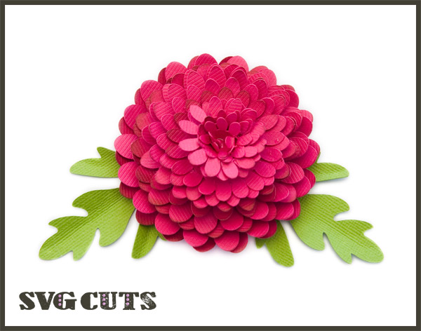 Zinnia svg #20, Download drawings