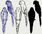 Parakeet svg