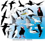 Albatross svg