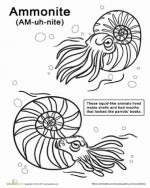 Ammonite coloring
