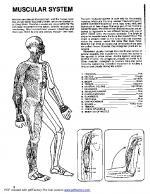 Anatomy coloring