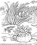 Sea Anemone coloring