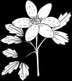 Anemone svg