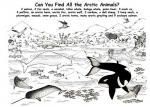 Antarctica coloring