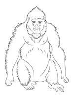 Ape coloring