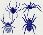 Arachnid svg