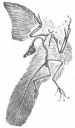 Archaeopteryx svg